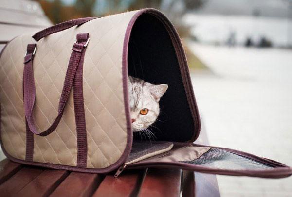 Поездки на дачу с котом или кошкой