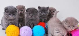 Воспитание и уход за котятами