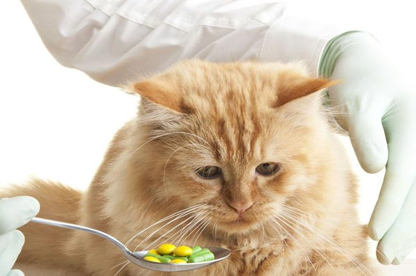 как давать таблетку от глистов котенку