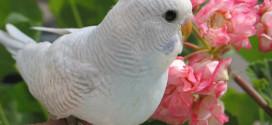 Правила содержания птицы. Незаметные убийцы