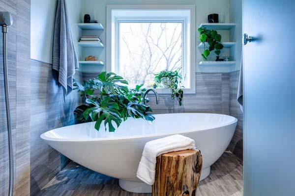 Как подобрать растения для ванной комнаты