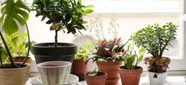 Экзотические растения на комнатном подоконнике (фото)