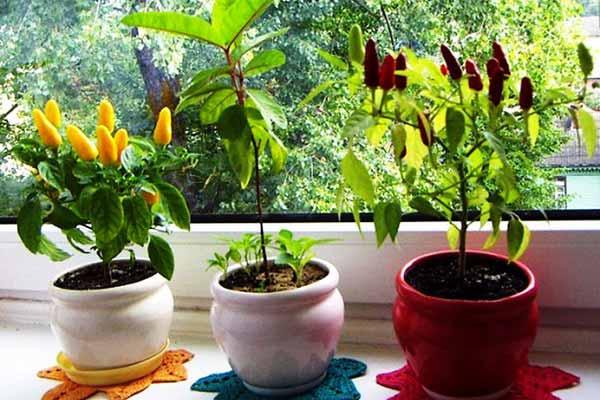 Экзотические растения на комнатном подоконнике