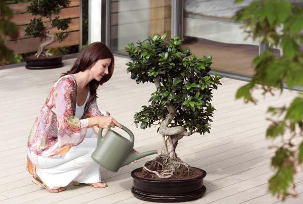 Украшаем интерьер квартиры при помощи комнатных растений (7 фото)