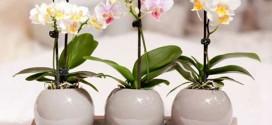 Как ухаживать за орхидеями и размножать их?