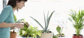 5 домашних растений для начинающего цветовода (фото)