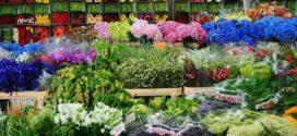Бизнес: продажа цветов оптом