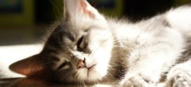 Коты и кошки: как понять, что ваш любимец болен