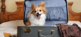 Стоит ли брать домашнего питомца с собой в путешествие