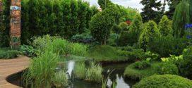 Растения для современного ландшафтного дизайна