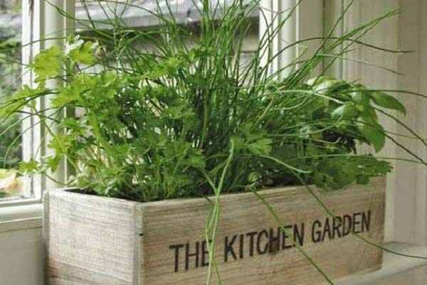 Вырастить овощи и зелень на подоконнике