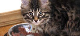 Чем кормить котов и кошек?