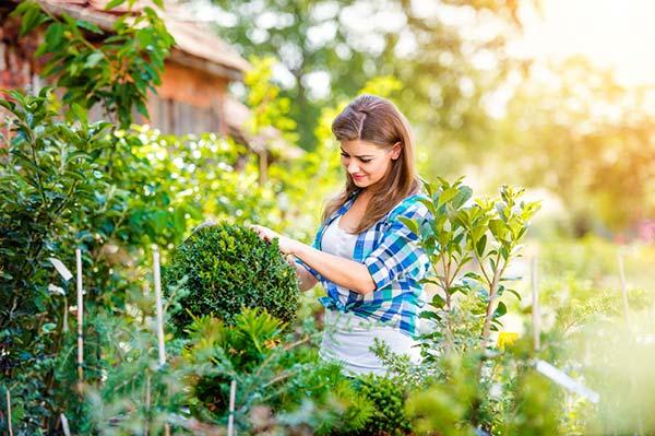Украшение садового ландшафта