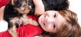 10 пород мелких собак, которые дружелюбно относятся к детям