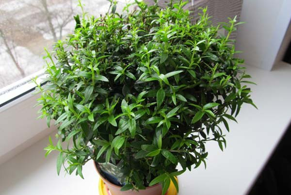 10 комнатных растений, которые принесут любовь и счастье в ваш дом
