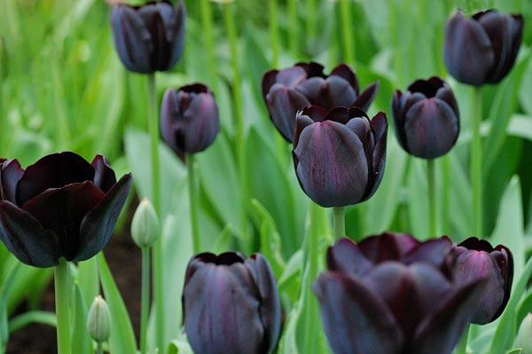 5 самых дорогих сортов цветов в мире (фото)