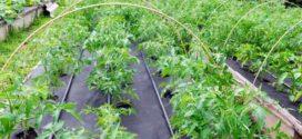 Где и как используется агроволокно